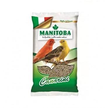 manitoba-miscuglio-canarini