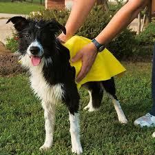 GRO-5958 απορροφητική πετσέτα για σκύλους ferplast2