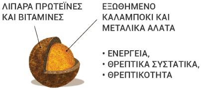 ricette di campagna kroketa